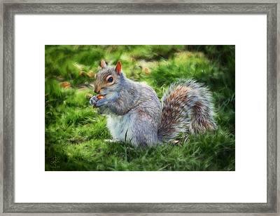 Framed Print featuring the photograph Ground Squirrel by Pennie  McCracken