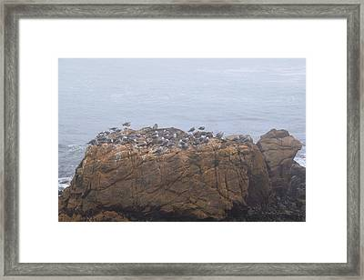 Grounded Due To Fog Cambria California Framed Print by Barbra Snyder
