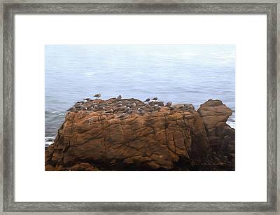 Grounded Due To Fog Cambria California Painting Framed Print by Barbra Snyder