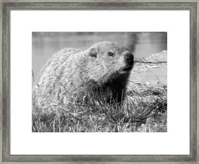Groundhog Framed Print by Erika Kennedy