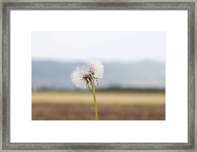 Groundsel In The Wind Framed Print