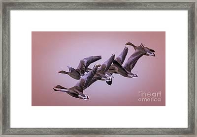 Framed Print featuring the photograph  Group Flight  by Franziskus Pfleghart