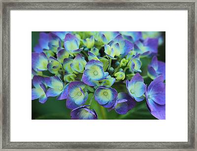 Group Hug Framed Print by Connie Handscomb