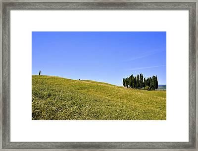 Group Of Cypresses Framed Print