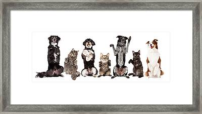 Group Of Dogs And Cats Together Begging Framed Print