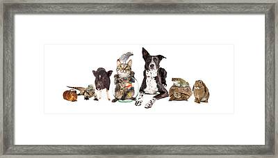 Group Of Domestic Pets Sitting Together Framed Print