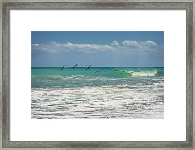 Group Of Pelicans Over The Ocean Framed Print by Zina Stromberg