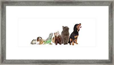 Group Of Pets Looking Up And Side Banner Framed Print