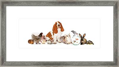Group Of Pets Together Over White Framed Print
