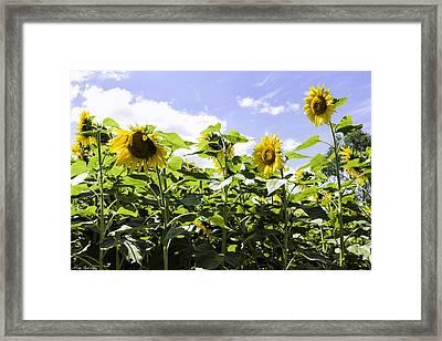 Group Of Sunflowers Framed Print