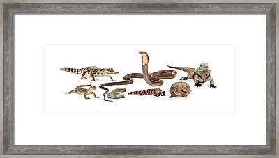 Group Of Various Reptiles Framed Print