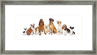 Group Of Various Size Dogs Framed Print