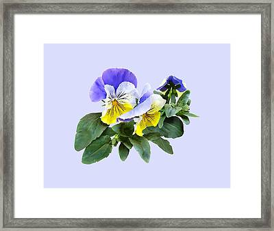Group Of Yellow And Purple Pansies Framed Print by Susan Savad