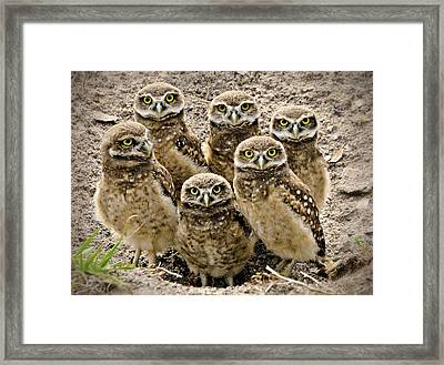 Group Shot Framed Print