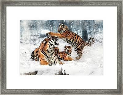 Group Therapy Framed Print by Julie L Hoddinott