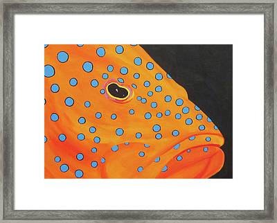 Grouper Head Framed Print by Anne Marie Brown