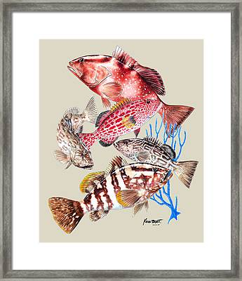 Grouper Montage Framed Print by Kevin Brant