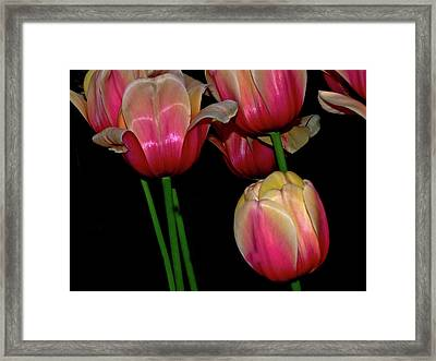 Grouping Ofpink And Yellow Tulips Framed Print