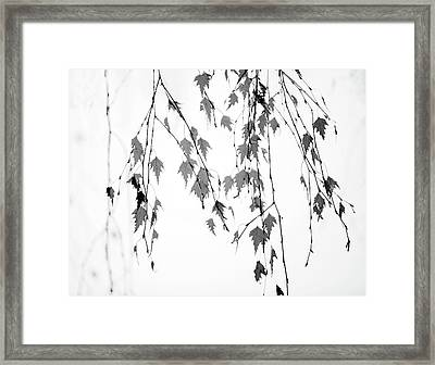 Framed Print featuring the photograph Groupings by Rebecca Cozart