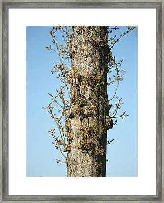 Growing In All Directions Framed Print by Magda Levin-Gutierrez