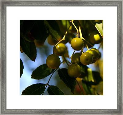 Growing In The Shade Framed Print