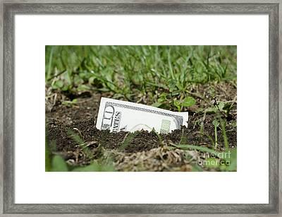 Growing Money Framed Print by Mats Silvan