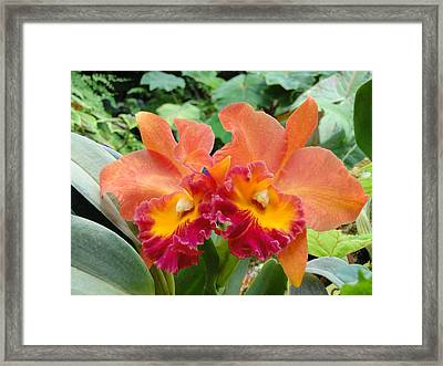 Growing Together Framed Print by Gail Butters Cohen