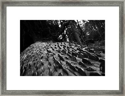 Grows On Trees Framed Print by Nichola Denny