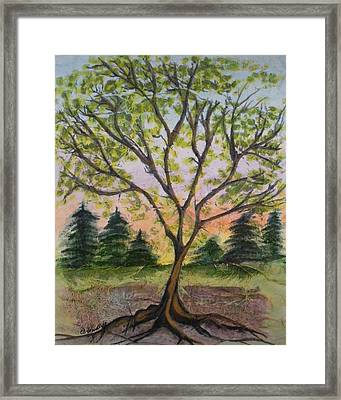Growth Framed Print by CB Woodling