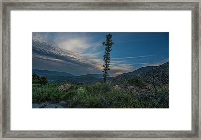 Growth Spurt To The Heavens Framed Print