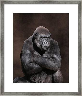 Grumpy Gorilla Framed Print