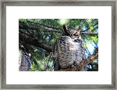 Grumpy Framed Print by Lawrence Christopher