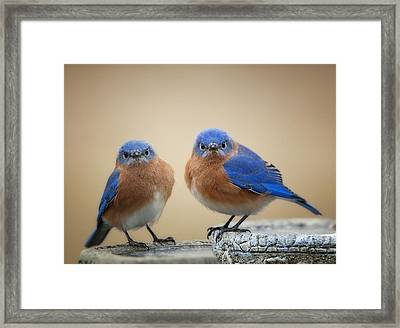 Grumpy Little Men Framed Print by Bonnie Barry