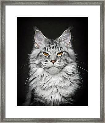 Framed Print featuring the photograph Grumpy Silver. by Robert Sijka