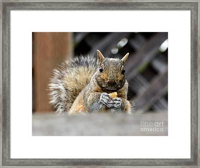 Framed Print featuring the photograph Grumpy Squirrel by Susan Wiedmann