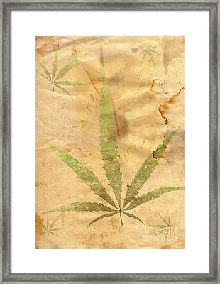 Grunge Paper With Leaf Of Grass Framed Print by Michal Boubin