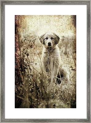 Grunge Puppy Framed Print