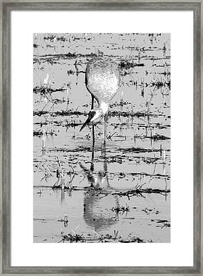 Grus Canadensis 2 Framed Print