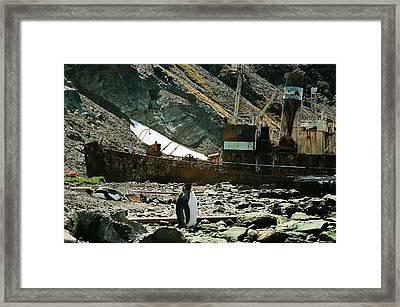 Grytviken Sentinel Framed Print