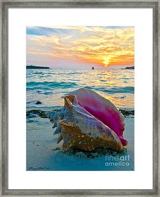 Guana Conch  Framed Print by Carey Chen