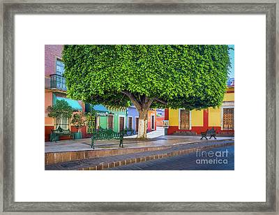 Guanajuato Small Park Framed Print by Inge Johnsson