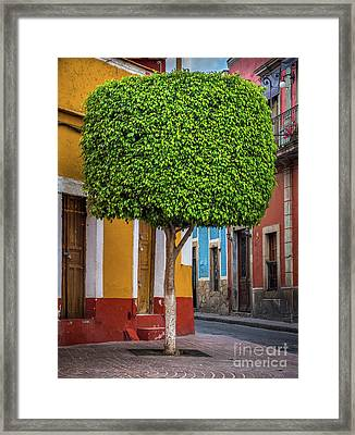 Guanajuato Tree Framed Print by Inge Johnsson