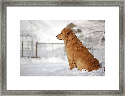 Guard Framed Print by Laura Mountainspring
