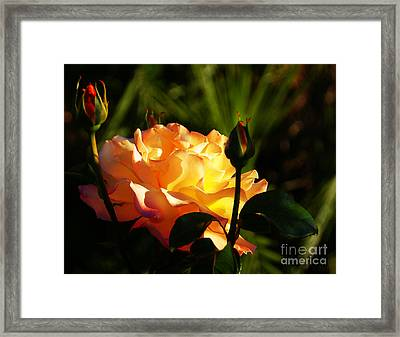 Guarded Framed Print