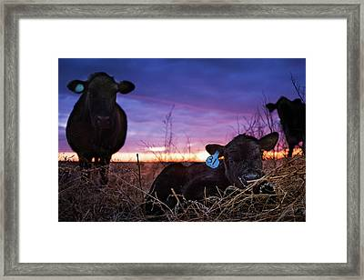 Guarded Framed Print by Thomas Zimmerman