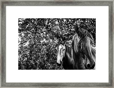 Guardian Of His Mate Framed Print by Toni Hopper