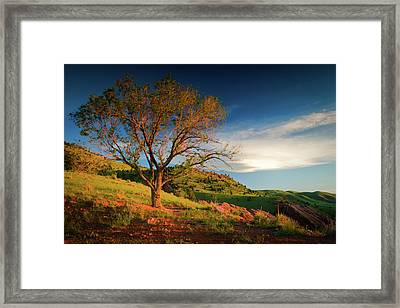 Framed Print featuring the photograph Guardian Of Light by John De Bord