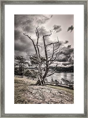 Guardian Of The Bay Framed Print