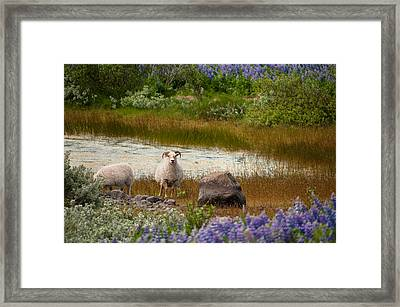 Guardian Framed Print by William Beuther