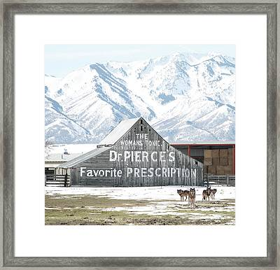 Guardians Of The Tonic Framed Print